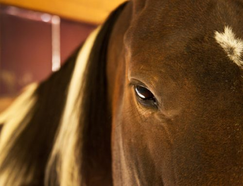 If You Could See Yourself Through The Eyes Of A Horse