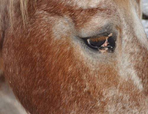 How Horses are Supporting Us Through this Global Transformation